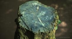 petemcnally_treestump_image03