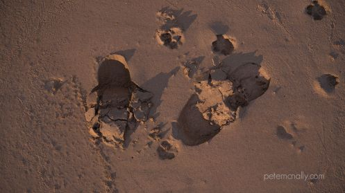 petemcnally_3d_scan_sand04