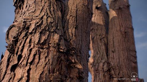 petemcnally_3Dscan_treebark02